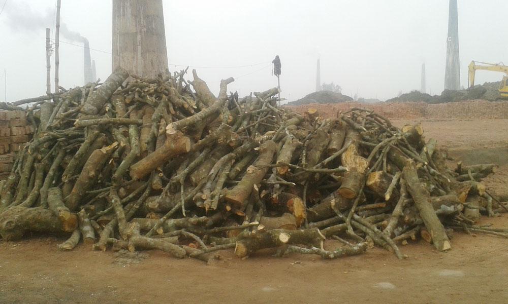 গাজীপুরে ইটভাটায় কয়লার বদলে পুড়ছে কাঠ, প্রশাসন নিরব
