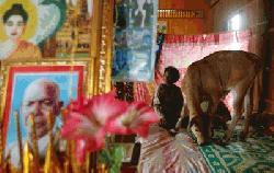 বাছুরকে স্বামী বানিয়ে বিশ্বে গণমাধ্যমের শিরোনাম এই নারী