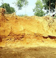 রাজনগরে টিলা কেটে ভরাট হচ্ছে সার কারখানার আবাসিক জমি